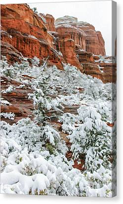 Snow 06-051 Canvas Print by Scott McAllister