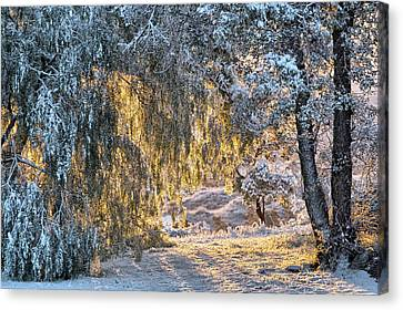 Snow At Sunrise 4 Canvas Print