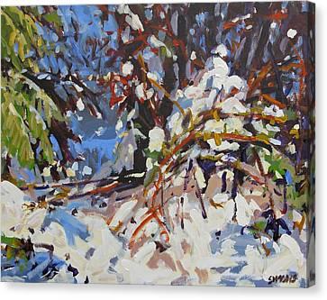 Snow Bound Canvas Print by Brian Simons