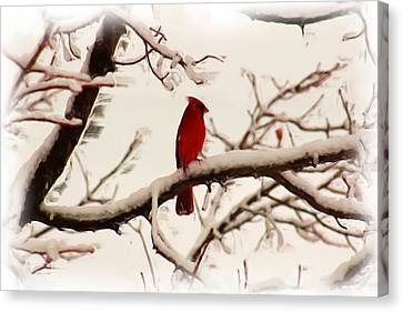 Snow Cardinal Canvas Print by Janet Pugh
