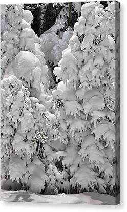 Canvas Print featuring the photograph Snow Coat by Alex Grichenko