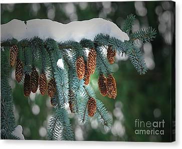 Snow Cones Canvas Print by Sharon Talson