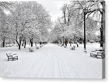 Snow Covered Benches And Trees In Washington Park Canvas Print by Shobeir Ansari