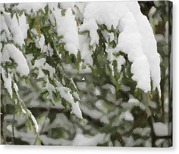 Snow Covered Branches Canvas Print by Donna Cavanaugh