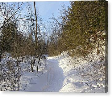Snow Covered Pathway Canvas Print by Richard Mitchell