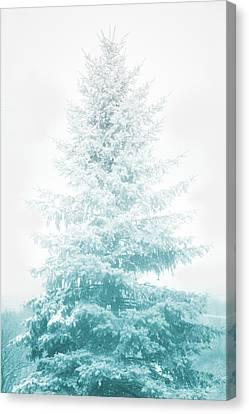 Snow Covered Pine Tree Canvas Print