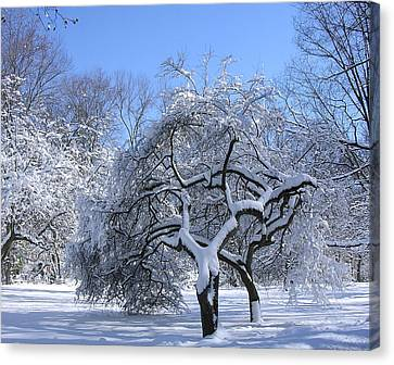 Canvas Print featuring the photograph Snow-covered Sunlit Apple Trees by Byron Varvarigos