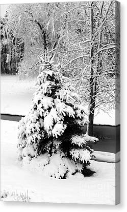 Snow Covered Trees Canvas Print by Kathleen Struckle