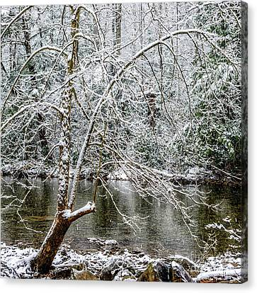 Canvas Print featuring the photograph Snow Cranberry River by Thomas R Fletcher