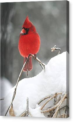 Canvas Print featuring the photograph Snow Day by Diane Merkle