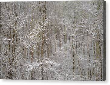 Snow Days Canvas Print by Joseph Smith