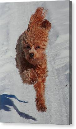 Snow Dog Canvas Print by Diane Merkle