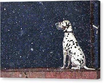 Snow Dog Canvas Print by Yury Bashkin
