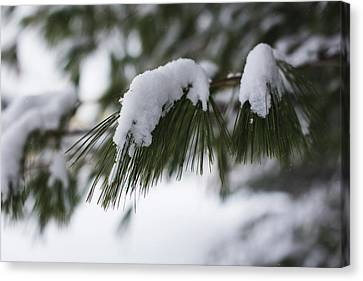 Canvas Print featuring the photograph Snow Falling On The White Pines by Andrew Pacheco