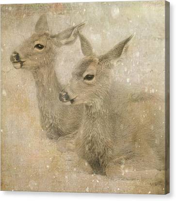 Canvas Print featuring the photograph Snow Fawns by Sally Banfill