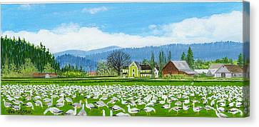 Snow Geese And A Farm House Canvas Print by Bob Patterson