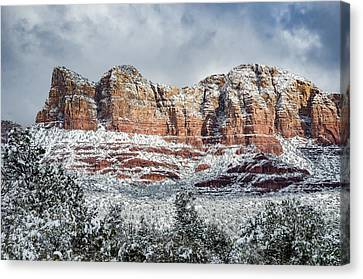 Brown White Sedona Trees Canvas Print - Snow In Sedona by Brian Oakley Photography