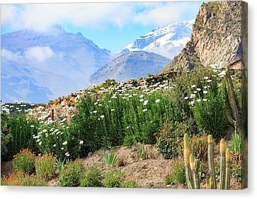 Canvas Print featuring the photograph Snow In The Desert by David Chandler