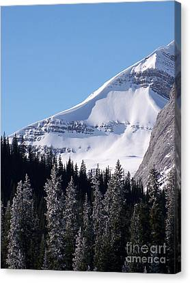 Snow Ledge Canvas Print by Greg Hammond