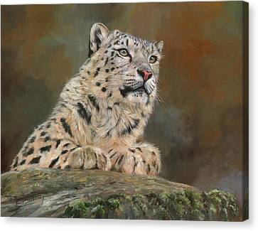 Snow Leopard On Rock Canvas Print by David Stribbling