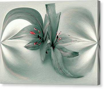 Snow Lilies Canvas Print by Irma BACKELANT GALLERIES