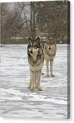 Canvas Print featuring the photograph Snow Mates by Shari Jardina