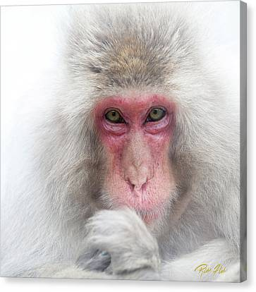 Canvas Print featuring the photograph Snow Monkey Consideration by Rikk Flohr