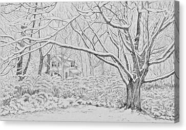 Snow On An Old Ash Tree Canvas Print by Janice Petrella-Walsh