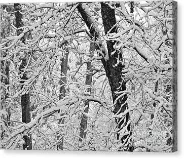 Snow On The Trees In Black And White Canvas Print by Mary Ann Weger