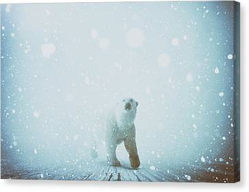 Snow Patrol Canvas Print