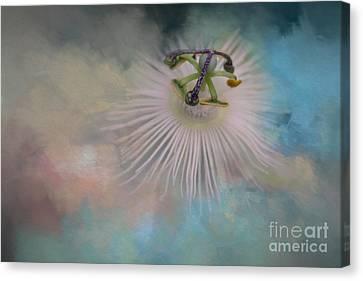 Passiflora Canvas Print - Snow Queen by Eva Lechner