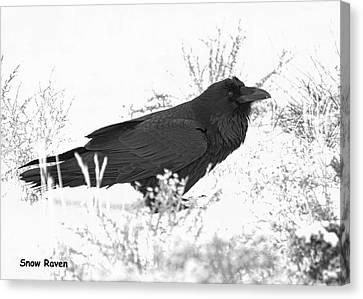 Canvas Print featuring the photograph Snow Raven Card by Britt Runyon