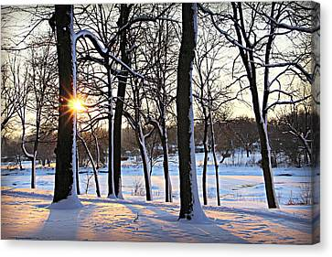 Snow Starred Grove Canvas Print by Kathy M Krause