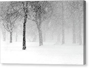 Snow Storm At Starved Rock Canvas Print