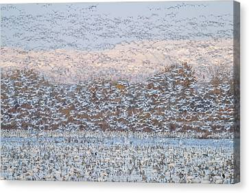 Snow Storm Canvas Print by Nick Kalathas