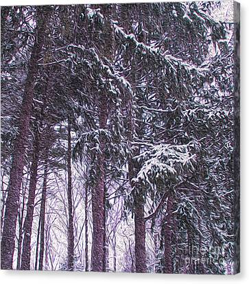 Snow Storm On Pines Canvas Print by Sandy Moulder