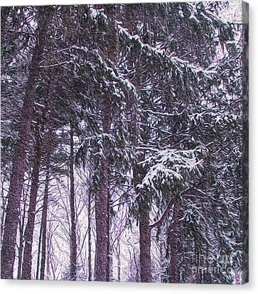 Snow Storm On Pines Canvas Print