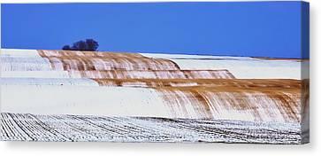 Snow Stubble Tree Line 13955 Canvas Print by Jerry Sodorff