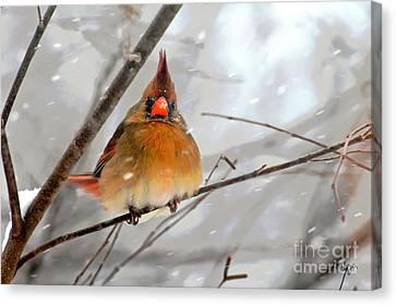 Snow Surprise Canvas Print by Lois Bryan
