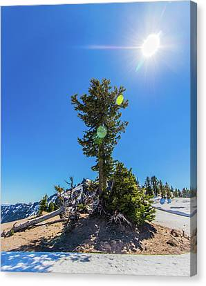 Canvas Print featuring the photograph Snow Tree by Jonny D