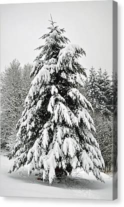 Snow Tree Canvas Print by Matthew Adair