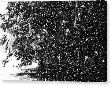 Canvas Print featuring the photograph Snow by Yulia Kazansky