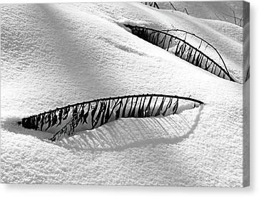 Snowbound Canvas Print by Debbie Oppermann