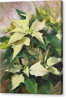 Snowcap Poinsettia Canvas Print by Anna Rose Bain