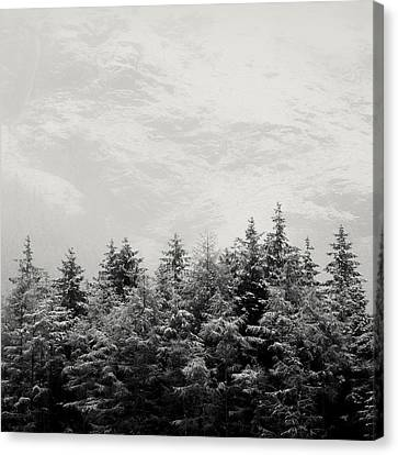Snowcapped Firs Canvas Print by Dave Bowman