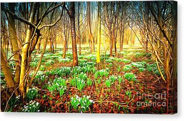 Snowdrops In The Woods Canvas Print by Mick Flynn