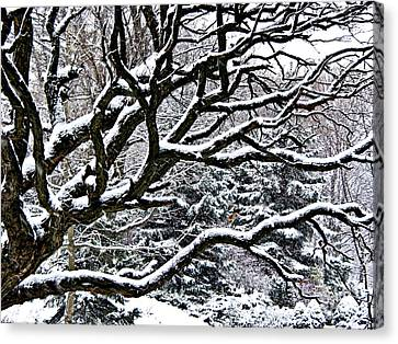 Snowfall And Tree Canvas Print by Elena Elisseeva