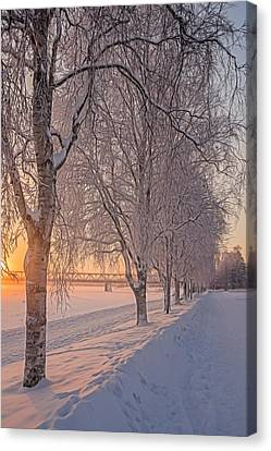 Snowfall Canvas Print by Angela Aird