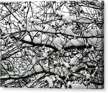 Snowfall On Branches Canvas Print by Deborah  Crew-Johnson