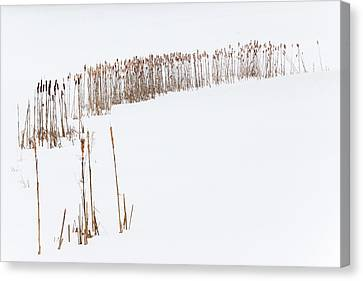 Snowfield 2 - Canvas Print